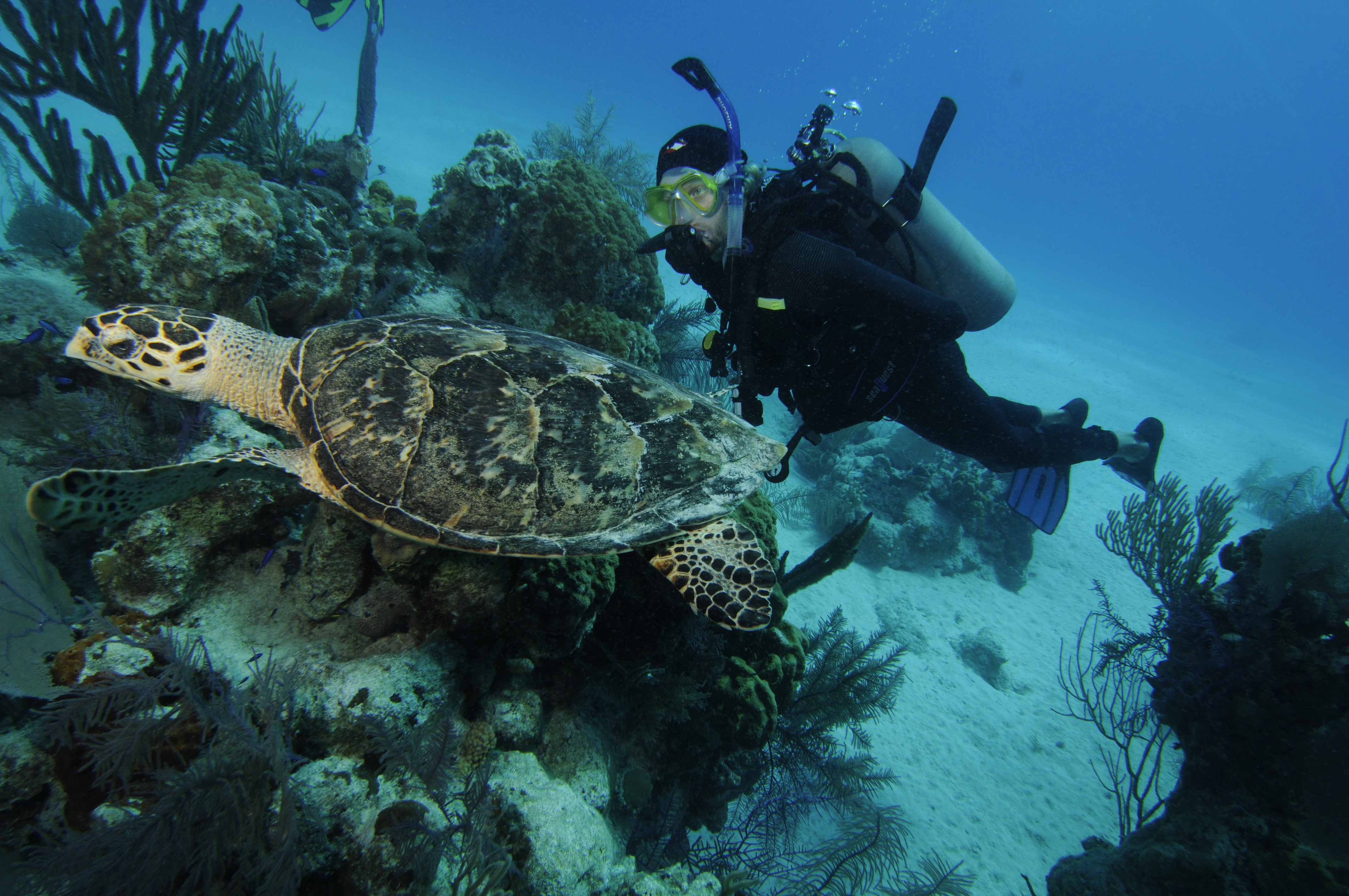 Grand Turk Diving, Turks And Caicos Diving, Caribbean